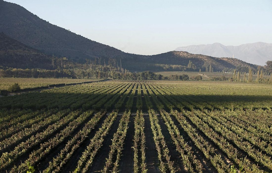Casa Real Special Reserva - čilské víno s kráľovskou chuťou